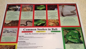 Bali Reptile Rescue free poster about snakes in Bali
